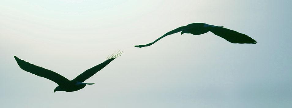 Eagle Psychology - Leisa Aitken